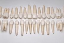 Collections: Teeth / by Mona Pennypacker