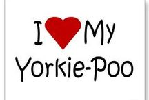 i love yorkie poos! / by Tami Tyler