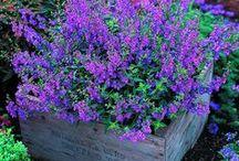 My Secret Garden / Gardening / by SABINA RUTH