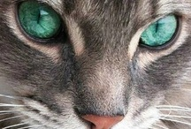 Cats & Kittens / Cat, kittens and other beautiful felines