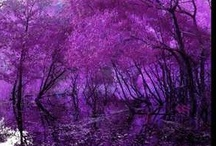 Purple / Beautiful shades of Purple, lilac, berry, violet and lavender.