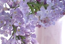 Lilacs and Wisteria / I love lilacs and wisteria. So soft and delicate.