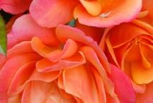 Orange & Fuschia
