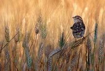 Bird / by Matteo Prencipe