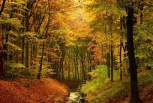 Autumn ~ Season of Mists