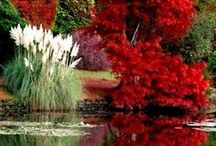 Autumn ~ Reflections