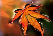 Autumn ~ Dreams & Memories