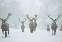 seasons | winter / by Kendra Stephenson