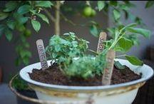 Garden equals love