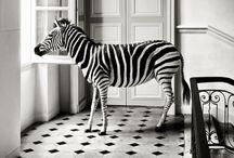 animals / by Kendra Stephenson
