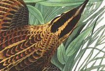 "John James Audubon / ""The worse my drawings were, the more beautiful did the originals appear."" John James Audubon"