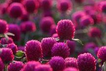 Flower Loveliness / None