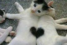 Adorable Cute