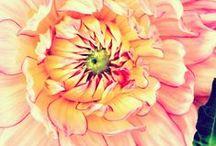 In bloom / Podrán cortar todas las flores, pero no podrán detener la primavera. Pablo Neruda / by Nashua