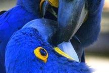 Colour: Breezy BLUE