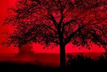 Colour: Randomly RED