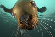 Under the Sea ~~~~~