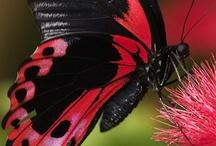 Flowers, Butterflies, & Gardens