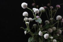 // FLOWERS // / Flowers