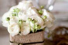 kerti virágok / cut flowers