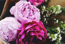 fleur / by Maddie Owen