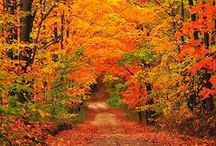Outdoors in Fall | Landscaping / Autumn is a wonderful season, bursting with color.