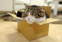 Maru! / by Amy Turpin