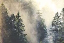 Spruce...