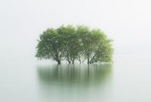 stillness / by Sam Elgar