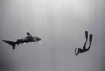 Sharks Love / by Grace Choong