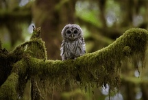 Whooo's That? / by Linnea Armstrong