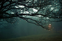 Trees / by Linnea Armstrong