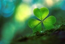 Luck of the Irish / by Amy Turpin