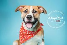 Happy Tails - Adopted dogs and cats / Dogs, cats and other animals that have a happy tail to tell - they are adopted and in their furever homes!