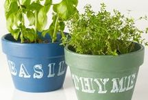 Gardening / Tips for gardening in small spaces.