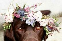 Wedding Pups / Canine nuptial participation.