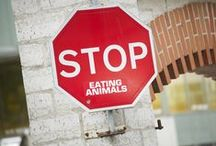 Ethics / Veganism, vegetarianism, eco-friendly living...