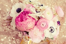 Wedding Bouquet & Bouts / by Sarah Tate