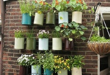 Outdoor Living / Gardening / by Cami Thomas