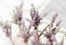 Wedding Themes: Lavender & Linen / Ideas for a Lavender and linen themed wedding