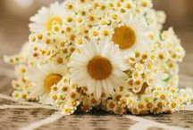Wedding Themes: Sunflowers and Daisies / Ideas for a sunflower and daisy themed wedding