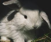 BEAUTY | Cruelty Free Companies / Makeup, hair & skincare companies that do not test on animals.