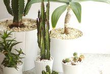 Grow indoor / Greening indoor, container garden, indoor plants