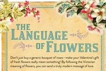 Flower Facts / Everything and anything you need to know about flowers.  / by WHAT A BLOOM Florist in Canada