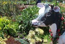 Garden Design Resources