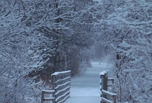 white christmas / dedicated to the beauty of the Christmas and winter season
