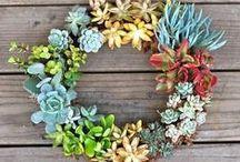 Succulent Crafts
