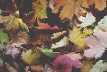 Autumn, my favorite season. <3  / Because i'm in love with warm colors ! <3