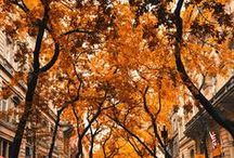 Enthralled by Fall