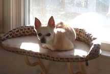 Pippi / Studio mate, walking companion, and beloved chihuahua
